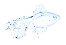 Water fish splash isolated on white Royalty Free Stock Photography