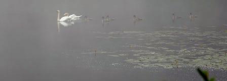 Water, Flock, Atmosphere, Bird stock images