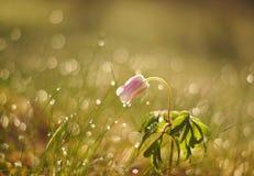 Water, Flora, Flower, Moisture Stock Images