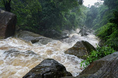 Water flow forest. Water flow cascade between rocks Royalty Free Stock Photo