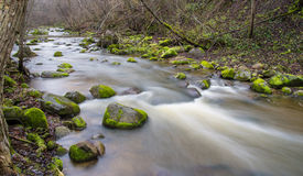 Water flow. In forest spring Stock Image