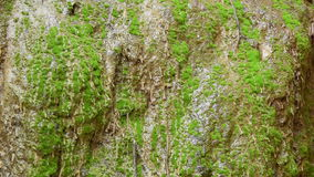 Water flow on green moss. stock video
