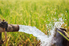Water flow from large pump tube in rice field in central of Thai Royalty Free Stock Images