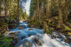 Water Flow. The magic of a mountain stream captured on a HDR image allows to bring out the colours and details of darker details in the shade of the big pine Stock Photo