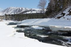 Water flow in the melting river among ice coast near mountains. Ursule River, Ongudaysky district, Altai, Russia Royalty Free Stock Image