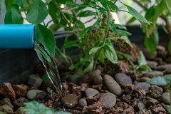 Water flow out from PVC pipe. To the grow bed in aquaponic system royalty free stock photo