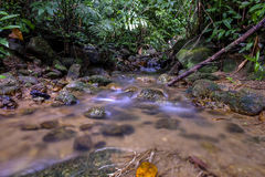 A water flow on the river in the tropical forest Stock Images