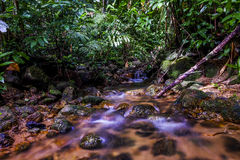 A water flow on the river in the tropical forest Royalty Free Stock Photography