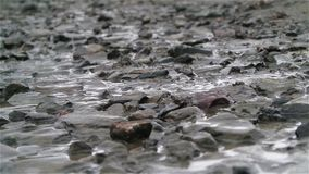 Water flow among small rocks close up stock video