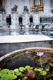Water flower in a buddhist temple Royalty Free Stock Photo