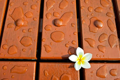 Water and flower drops on wood floor Stock Photo