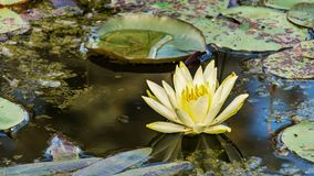 Water, Flower, Nature, Flora royalty free stock images