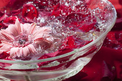 Water with flower petals. Fragrant water with flower petals and drops to the spa Stock Photos