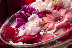 Water with flower petals Royalty Free Stock Photos