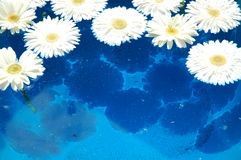 Water flowers. Flowers into the blue water stock image