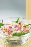 Water and flowers. Flowers floating in a bowl with water Stock Photos