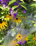 Water and flowers Royalty Free Stock Photography