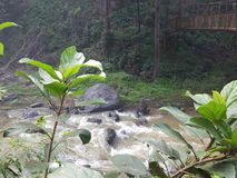 Water flowing. From abbi water falls ,trees and small bridge are there Royalty Free Stock Photo