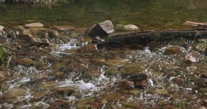 Shallow stream cascading and flowing over rocks, stones and a log. Water flowing and cascading over rocks, stones and a log in a forest, bush, creek stock footage