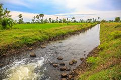 Water Is Flowing in a Channel through Green Rice Field stock photos