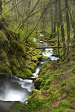 Water Flowing Down A Creek. Water flowing through green foliage during the spring royalty free stock photography