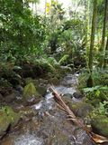 Water Flowing Through the Forest. Big Island, Papikou, Hawaii Royalty Free Stock Photography