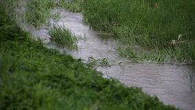 Water flowing on grass at spring stock footage