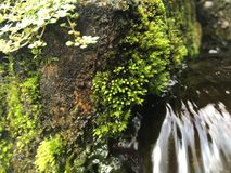 Water Flowing through Green Moss Growing on Wall of Tirta Empul, Holy Water Temple in Bali, Indonesia. Water Flowing through Green Moss Growing on Wall of Tirta Royalty Free Stock Photos