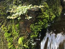 Water Flowing through Green Moss Growing on Wall of Tirta Empul, Holy Water Temple in Bali, Indonesia. Water Flowing through Green Moss Growing on Wall of Tirta Stock Photo