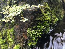 Water Flowing through Green Moss Growing on Wall of Tirta Empul, Holy Water Temple in Bali, Indonesia. Water Flowing through Green Moss Growing on Wall of Tirta Stock Photos