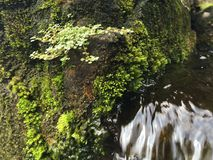 Water Flowing through Green Moss Growing on Wall of Tirta Empul, Holy Water Temple in Bali, Indonesia. Water Flowing through Green Moss Growing on Wall of Tirta Stock Photography