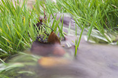 Water flowing over grass. Close up of water flowing over green grass with slow motion blur Stock Photos