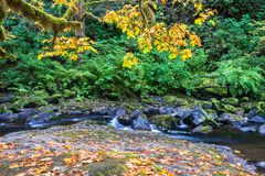 Water Flowing over Rocks in Creek Framed by Autumn Foliage. Beautiful mountain forest landscape with water flowing over rocks in Sweet Creek on hiking trail royalty free stock images