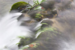 Water flowing over vegetation. Slow motion blur of water flowing over vegetation on riverbank Royalty Free Stock Photography