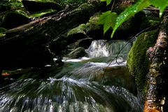 Flowing stream under a log in Quebec Canada. Water flowing under a down tree, moss covered stones deep in the forest of Quebec Canada Royalty Free Stock Images