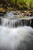 Water flowing through woods Stock Photo