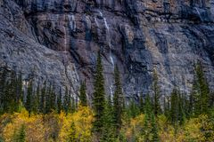 Weeping wall, Banff National Park, Alberta, Canada. Water flows down the cliffs of the weeping wall and appears to water the trees below Stock Image