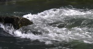 River water runs fast with white foam on rocks stock video