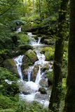 Water flows in forest. A stream flows downhill in a green forest in Switzerland Stock Images