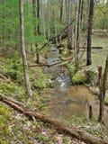 Stone Mountain Creek in North Carolina. Water flows over rocks creating small riffles along a sparsely wooded area of Stone Mountain Creek in Stone Mountain Stock Photos