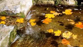 Water flows into pool by transparent stream against background of floating autumn leaves. stock video