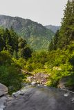 Water flows through spring into evergreen mountains. royalty free stock photos
