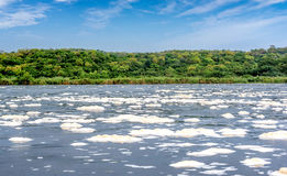 Water foam texture on Victoria Nile river in northern Uganda Stock Image
