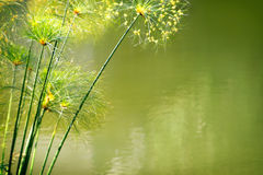 Water Foliage Royalty Free Stock Image
