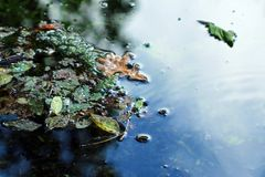Water foliage Stock Image