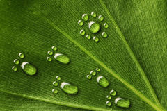 Water footprints on leaf Royalty Free Stock Photo