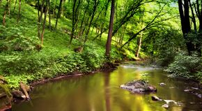 Water in forest Royalty Free Stock Images