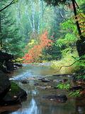Water in the forest. Water flowing among rocks at autumn Stock Image