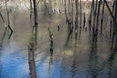 Water Forest Stock Photo