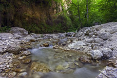 Water  in a forest  Italy Royalty Free Stock Photography